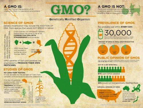 GMO kənd təsərrüfatı